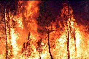 incendio-bosco-300x200